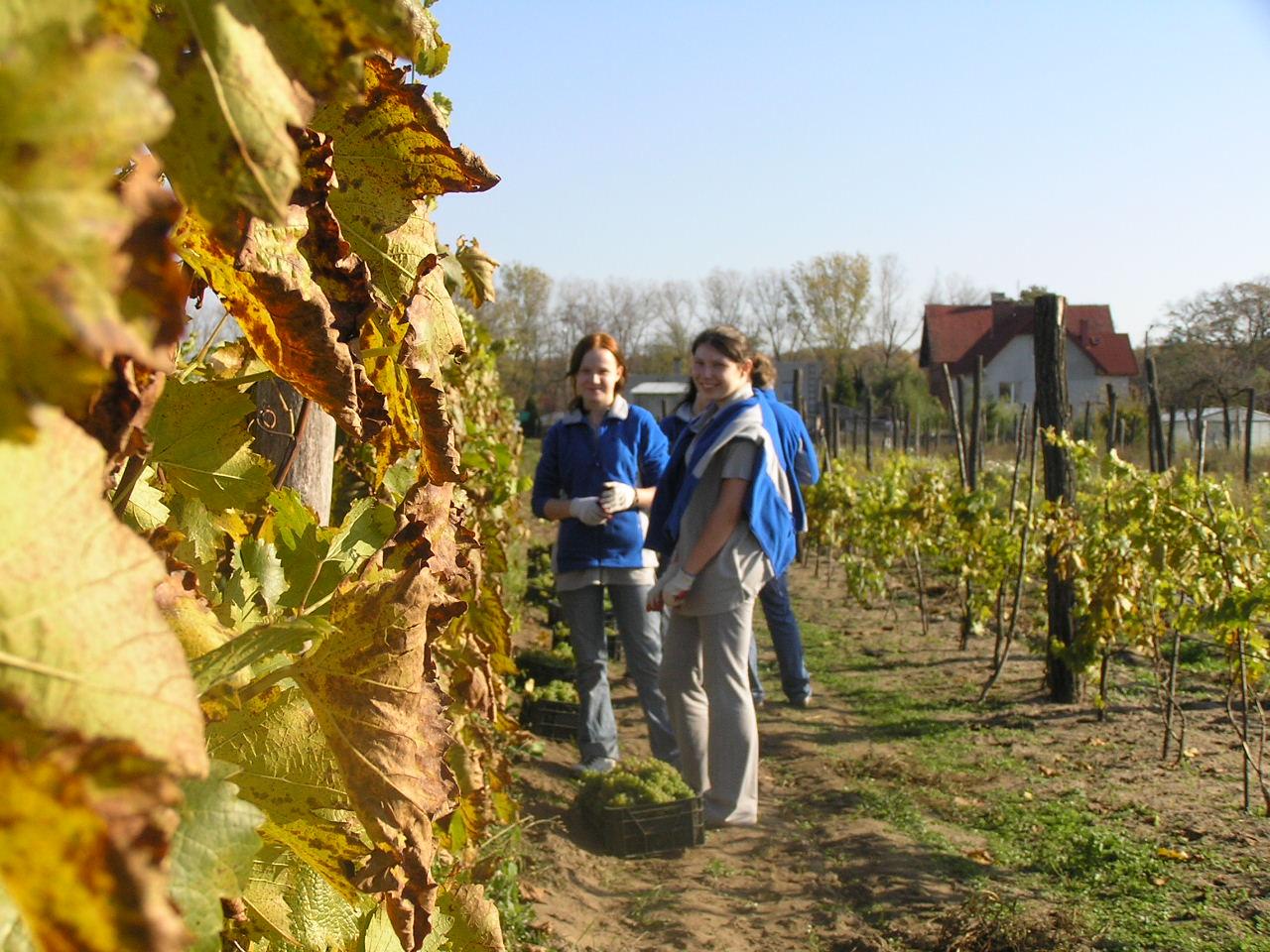 Agroturystyka winiarstwo