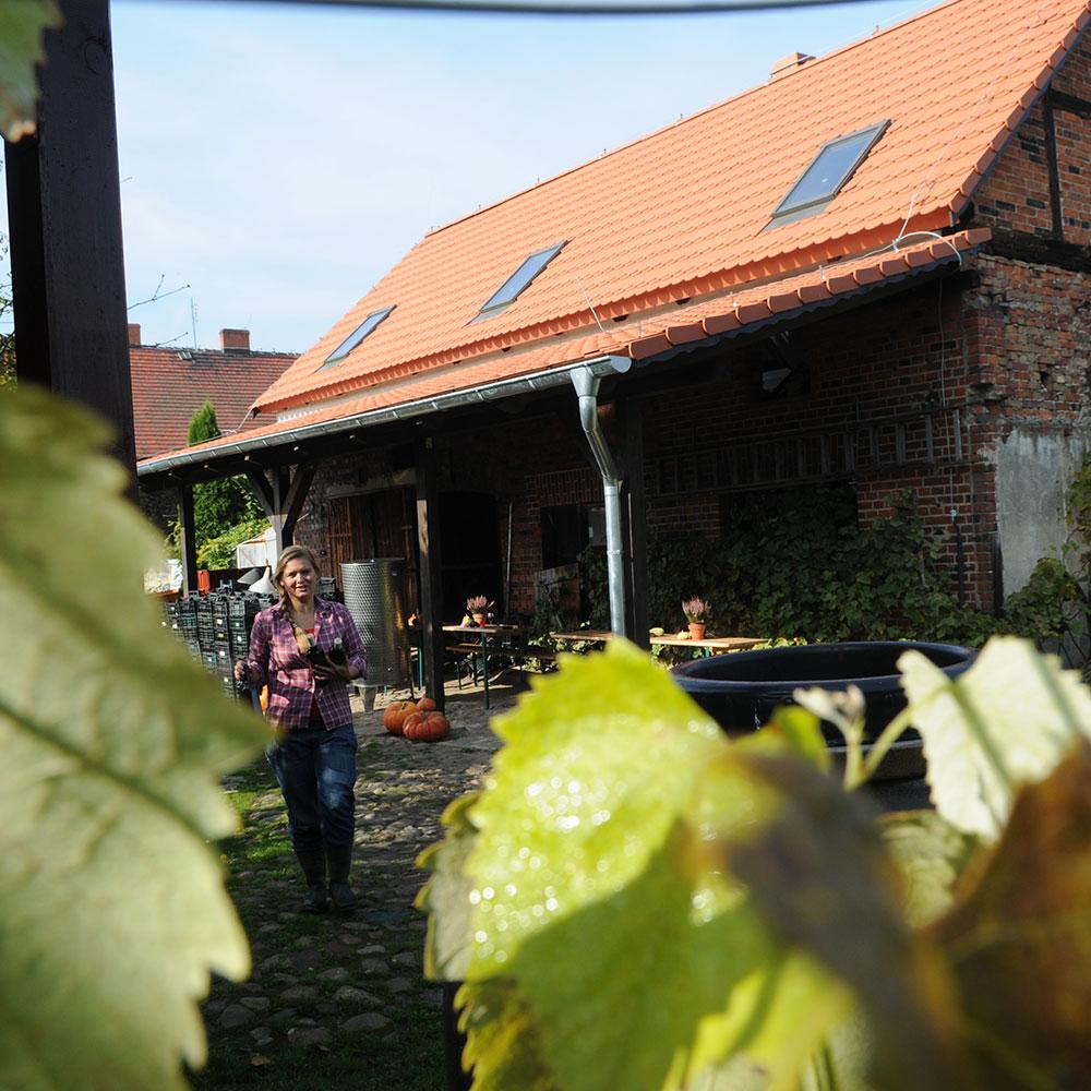 winnice lubuskie