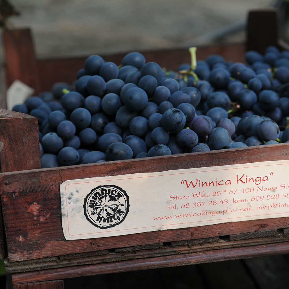 lubuskie winogron